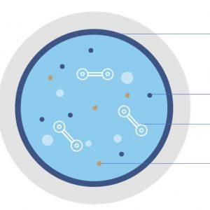 polyamines water treatment technology